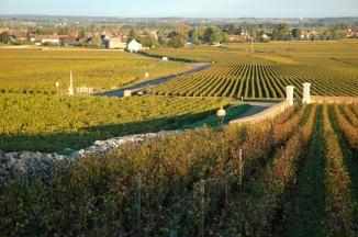 Puligny Vineyards