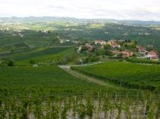 Barolo vineyards 2