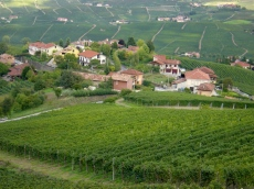 Barolo Vineyards 3