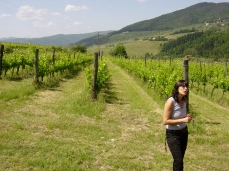 Selvapiana vineyard