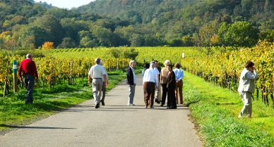 Visiting the vineyards