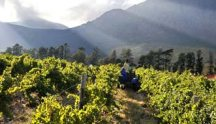 our_vineyards_image01