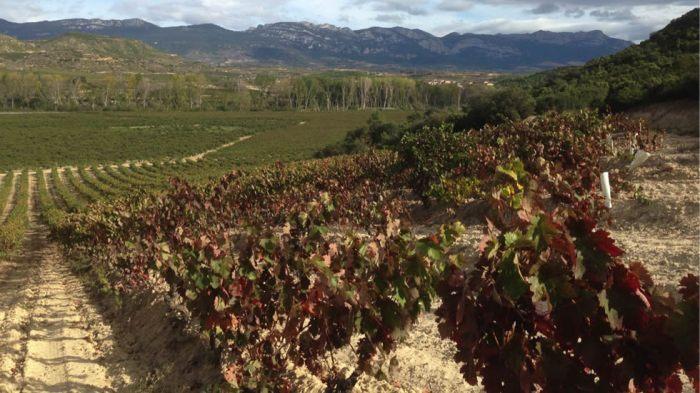 conde_de_hervias_harvest2014