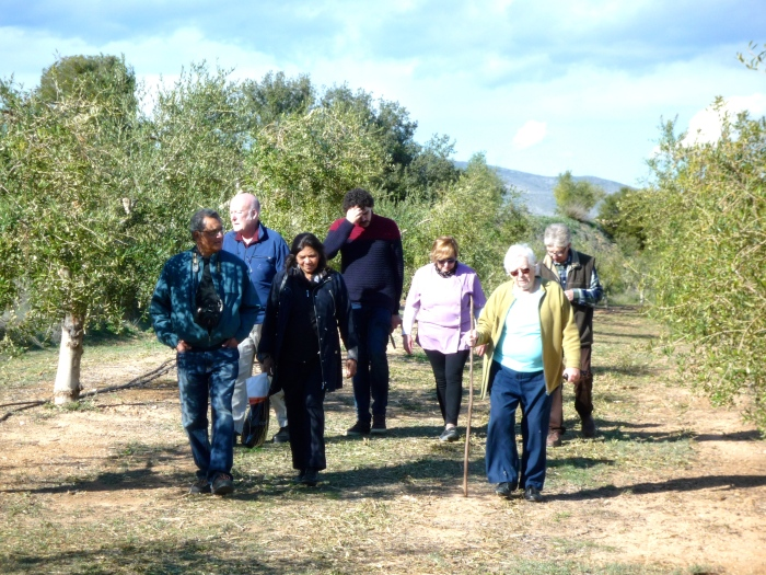 Post-lunch walk in the olive groves