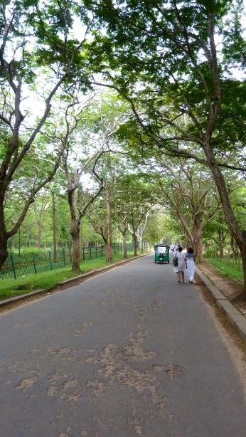 Avenue to haloed land