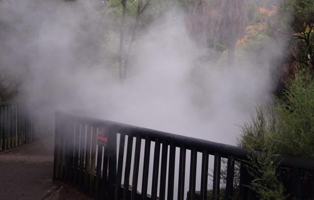 Steam drifting across the paths of a public park in Rotorua.