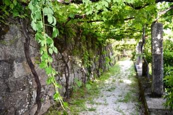 Laureiro vineyards in Lima Valley