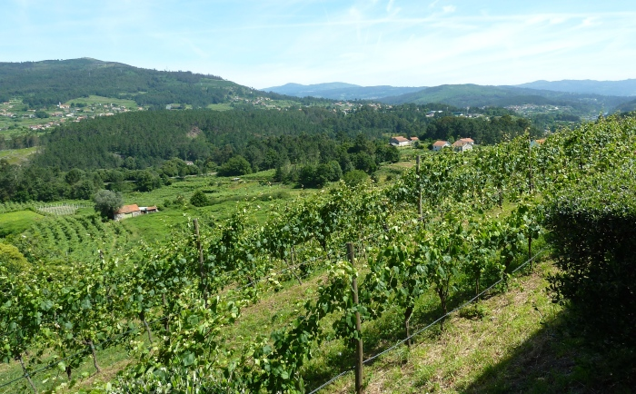 Alvarinho vineyards of Soalheiro