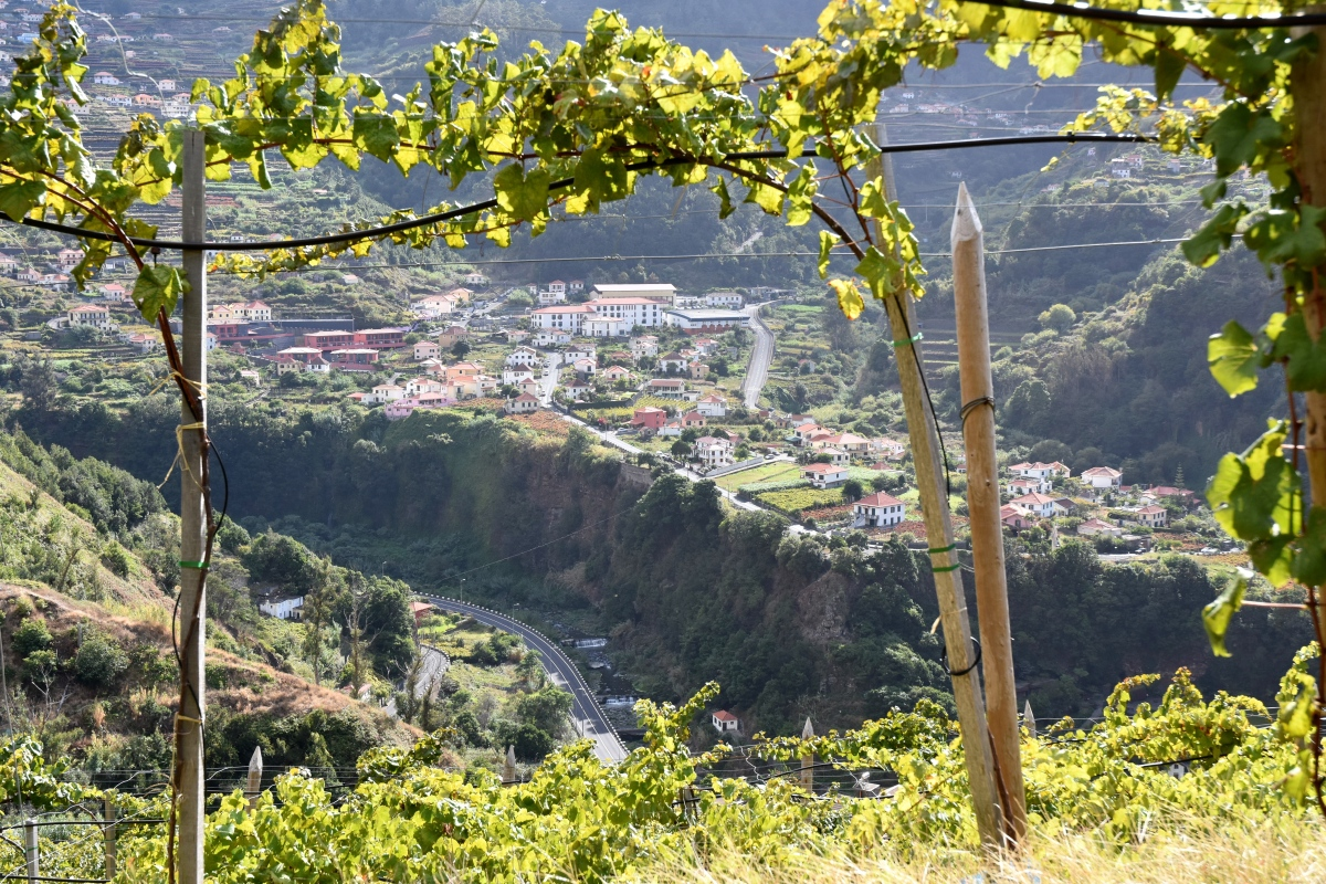 A Week In Madeira - 13. Wines of Quinta do Barbusano