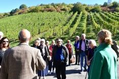 Kesselstatt vineyards